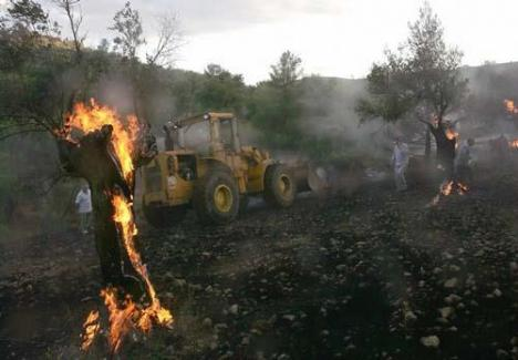 Settlers Burn Olive Trees Near Nablus