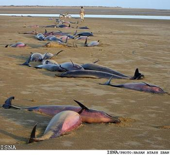 582292513_Dead_Dolphins_Jask_PersianGulf1_xlarge