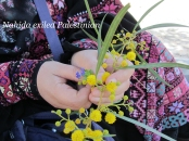 embroidery30