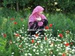 IMG_1216 copy