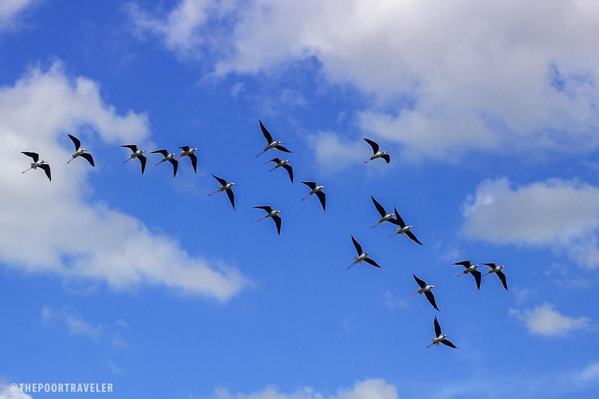 birds-flying-uep-laoang-northern-samar
